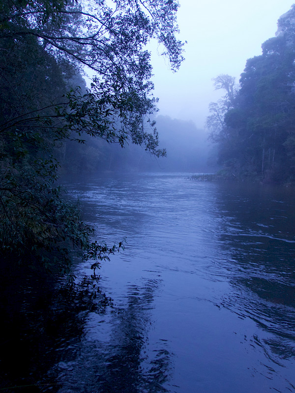 River shrouded in mist